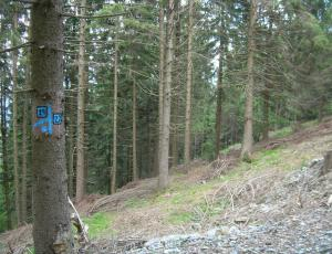 Piano di indirizzo forestale e Piani di assestamento forestale